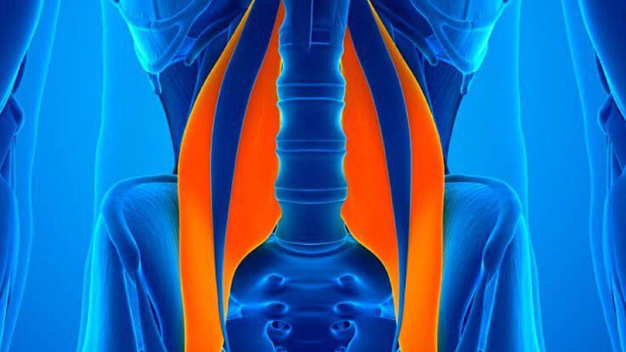 2psoas-conheça-um-dos-músculos-mais-importantes-1280x720.jpg